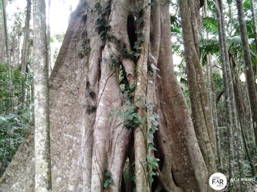 Sea Acres Rainforest