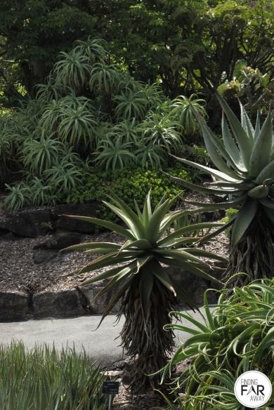 Mt Coot-Tha Botanical Gardens